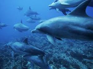 Il delfino simbolo del mare